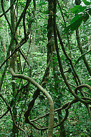 Tropical nature: African and South American rainforest biome: climate, ecology, trees, deforestation