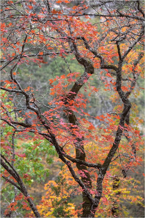 Not far from Vanderpool, Texas, Lost Maples State Park offers a respite from the crowded cities of San Antonio and Austin. While it is still a 3 hour drive, it is a nice place to take in and photograph the colors of the Texas Hill Country.