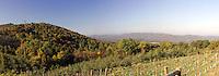 vineyard wine mountain overlook view