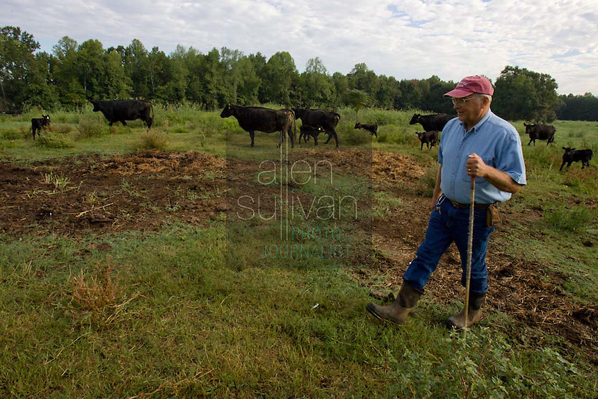 John Stuedemann works with his cattle in Comer, Ga. on Monday, Sept. 25, 2006. Stuedemann says he applies techniques with his cattle that he has learned since childhood in Iowa, such as positive reinforcement, minimal occurrences of pain or fear, and calm motions and speech.