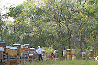 Tim Malfroy is always searching for the best spots to set up his Warré hives. Unlike other beekeepers, Tim Malfroy's apiaries remain in the same place and he looks for places with the maximum biodiversity so that his bees have food throughout a good part of the season.///Tim Malfroy recherche toujours les meilleurs emplacements pour installer ces ruches warré. Contrairement aux autres apiculteurs, les ruchers de Tim Malfroy sont sédentaires et il recherche des lieux avec le maximum de biodiversité pour que les abeilles aient de la nourriture pendant une bonne partie de la saison.