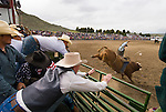 A bull rider jumps from the gate at theJordan Valley Big Loop Rodeo..