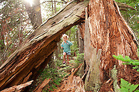 A young girl plays among the large old-growth pine stumps near her campsite at Craig Lake State Park near Michigamme Michigan.