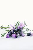 Photo of Lavender Preparation