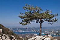 Single tree and Lac de Sainte Croix, Haute Provence, France