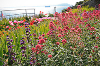 Gardens of Alcatraz with Centranthus ruber, Jupiter's Beard