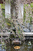 A weeping cherry blossom tree hangs over a pair of stone frogs in a pond in the garden at Tenryu-ji Temple, Kyoto