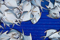 Fish lay on a blue table ready to be sold. Campbell Street market, Georgetown, Penang, Malaysia.