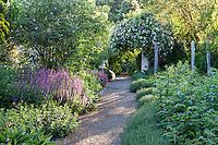 Gravel path through perennial garden in dappled light, 'Kiftsgate' rose Teucrium along path; Gary Ratway garden