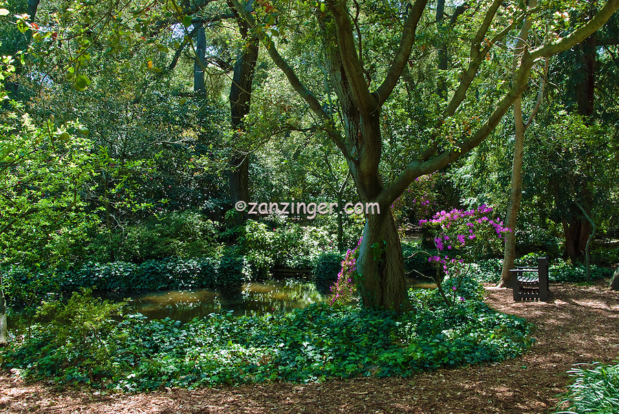 Descanso Gardens, La Canada, Flintridge, California