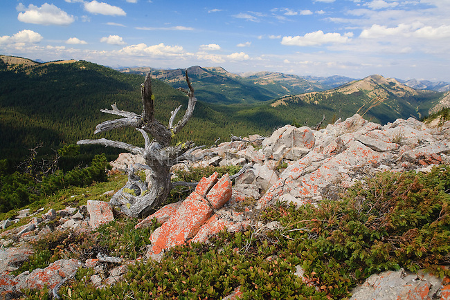 Lichen on the rocks in high mountain country of Montana