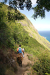 Hawaii: Molokai, the Mule Ride from the cliff tops down 1,600 feet to the leper colony at Kalaupapa. Model released..Photo himolo136-71846.Photo copyright Lee Foster, www.fostertravel.com, lee@fostertravel.com, 510-549-2202