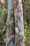 Fungus On Tree, Audubon Corkscrew Swamp Sanctuary