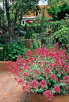 Jim Cohen garden