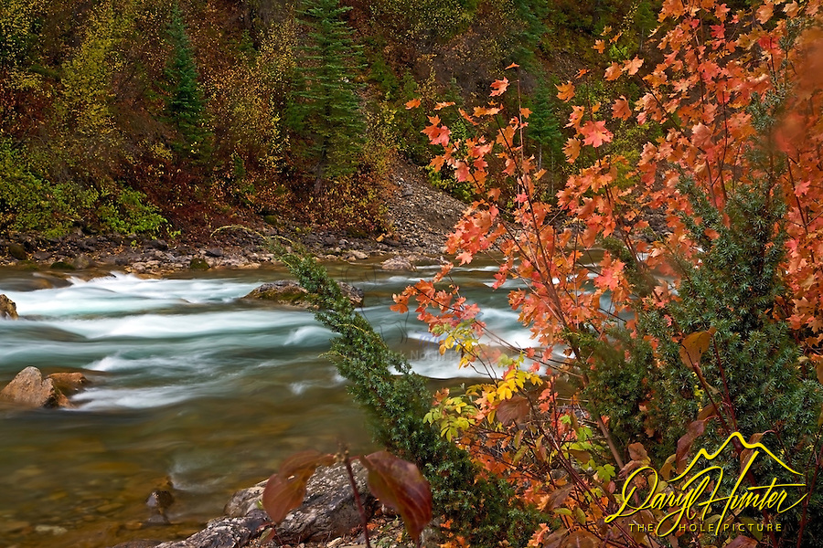 Fall colors, red mountan maple, Greys River, Salt River Range, Alpine, Wyoming