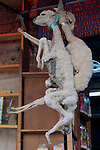 South America, Bolivia, La Paz. Dried llama fetuses at  the Witch Doctor's Market of La Paz.
