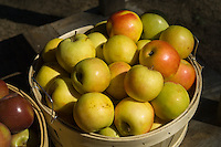 Bushel of golden apples
