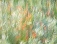 Wildflowers V