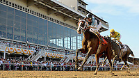 In Lingerie (No. 7), ridden by John Velazquez, wins the Black-Eyed Susan Stakes on Black-Eyed Susan Day at Pimlico Race Course in Baltimore, Maryland on May 18, 2012.