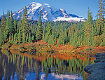 Mt. Rainier and autumn colors reflecting in Reflection Lakes, Mt. Rainier National Park, Washington State