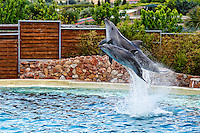 Dolphins jumping in formation in an aquarium