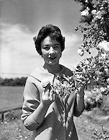 "Alice O'Sullivan, Dublin Rose, Winner of Rose of Tralee at Trimlestown Gardens, Booterstown.20/06/1959 ..Alice O'Sullivan is the first ever winner of The Rose of Tralee, having been crowned in 1959. In 2009, she was one of the judges for the fiftieth anniversary of the festival. Rosita Boland of The Irish Times commented on O'Sullivan's admission that she had not watched any of the television coverage of the event in the years since her win: ""This has to make her perspective tonight and tomorrow?on the annual mini-dramas of frocks, party pieces and lovely girls?unique among all past and present Rose of Tralee judges?..O'Sullivan was born in Dublin. She has lived in Roundwood, County Wicklow for four decades. Her father was a civil servant in Tralee, County Kerry. Working as an air hostess, she entered the Rose of Tralee at the age of 19. She later noted that she had to enter the hall alone as there was no escort system in the early years and that she had thought: ""God, this is embarrassing"". As the Dublin Rose, she beat four other contestants; two from the United Kingdom, one from New York and one from Tralee. Her prize involved the presentation of trophies at the races in Tralee for one week..."