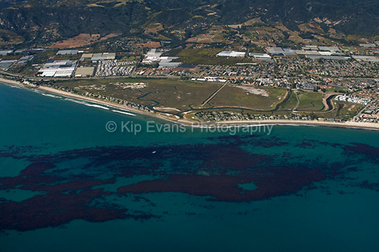 View of the Carpinteria Salt Marsh Reserve from the air looking north. The Carpinteria Salt Marsh Reserve contains a critically important Southern California estuary, which supports many sensitive plant and animal species. The site includes extensive wetland and channel habitats along with some uplands and is adjacent to a sandy beach, subtidal rocky reef, and kelp beds. The reserve provides habitat for migratory waterfowl along with several plants and animals listed as endangered, such as the salt marsh bird's-beak, light-footed clapper rail, and Belding's savannah sparrow. It is also an important regional nursery for halibut and other marine and estuarine fish (nrs.ucop.edu/Carpinteria-Salt-Marsh.com).