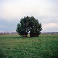 A tree without explanation near Wassaic, NY.