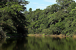 Rio Tigre River, edge of Jungle Forest, Primary Rainforest, Iquitos, Peru, flood area of , Amazonian, green leaves and shrubs, trees, reflection. .South America....