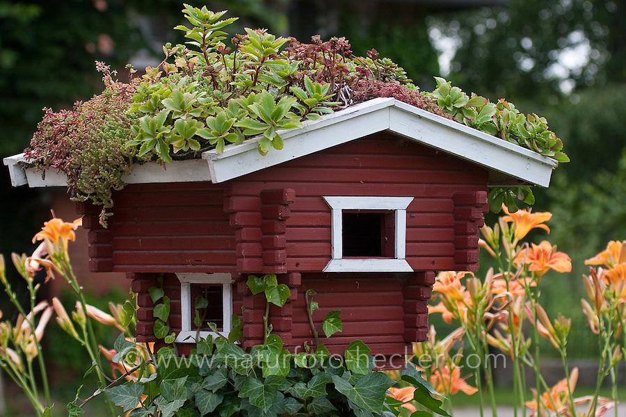 Dekoratives Vogelhäuschen im Sommer mit Grasdach, Sukkulenten auf dem Dach
