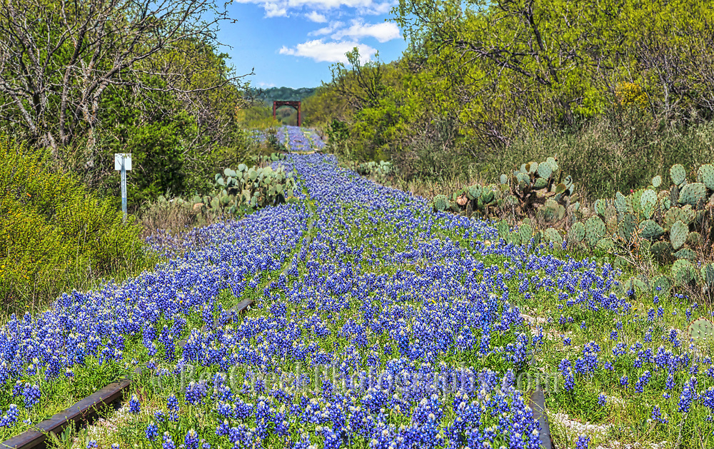 We captured this old railroad track littered with bluebonnets for as far as you could see in the Texas Hill Country.  This was an impressive bluebonnet landscape along the railroad track.  Just a note unfortunately, when we went back this year they were stomped down by people walking up and down the middle of the track! We may never be able to capture another image from this location.