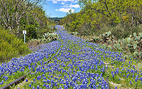We captured this old railroad track littered with bluebonnets for as far as you could see.  They were impressive and we came just in time as the grass was growing up fast.