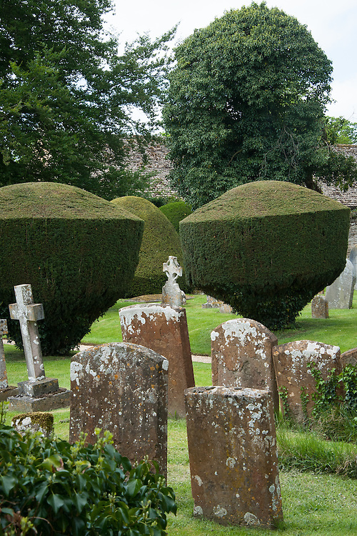 Yew topiary in the graveyard of St Leonard & St James Church, Rousham House and Garden.
