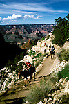 AZ, Arizona, Mule rides, no model release, at Grand Canyon National Park, Arizona.Photo Copyright: Lee Foster, lee@fostertravel.com, www.fostertravel.com, (510) 549-2202.azgran212