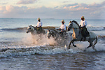 Lusitano horses are ridden through the waves on the beaches in Bahia, Brazil.