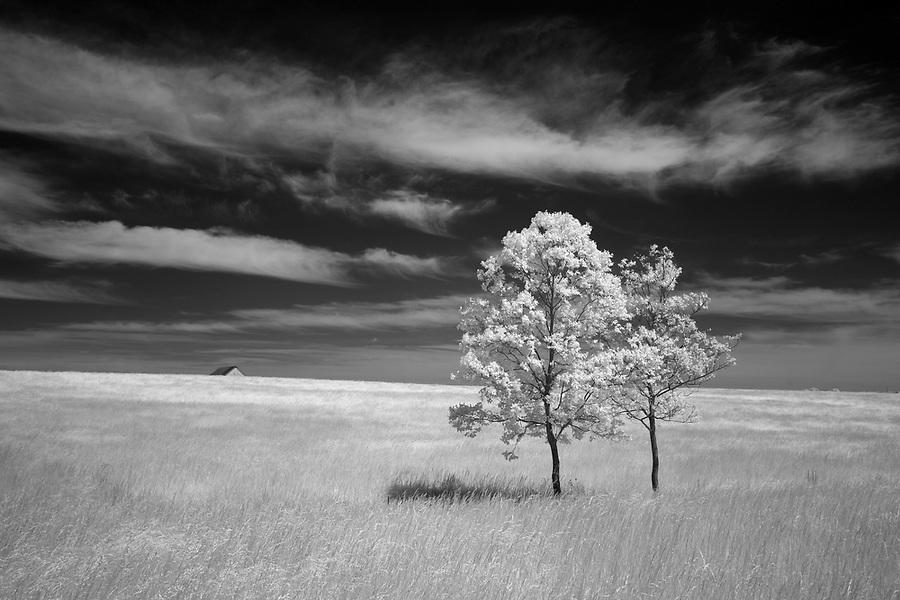 Lone trees in a field near Orange, VA. Photo/Andrew Shurtleff