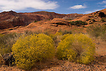 Snow Canyon State Park, Utah, UT, scenic of Red Kaibab sandstone with yellow saltbrush vegetation, rock formation, landform, arid, Southwest America, American Southwest, US, United States, Image ut406-18580, Photo copyright: Lee Foster, www.fostertravel.com, lee@fostertravel.com, 510-549-2202