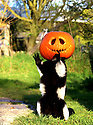 2016_10_29_peak_wildlife_pumpkins