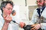 RSPCA  centre dealing with  birds effected by the  72,000 tonne  oil  spill on the Pembrokeshire coast from the Sea Empress oil tanker. 1996