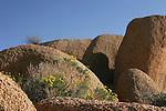 Golden Yarrow, Joshua Tree National Park, California