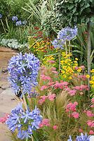Agapanthus, Achillea, Coreopsis in garden border