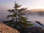Sunrise nature scenery of a pine tree on a shore of mist covered lake George. Killarney Provincial Park, Ontario, Canada.