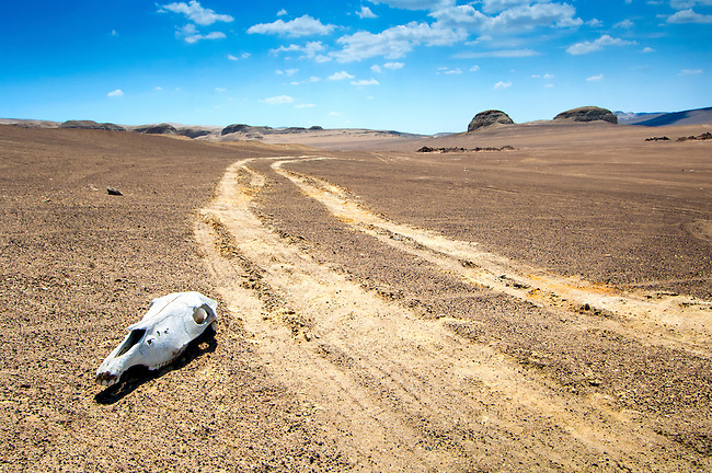 The Ocucaje Desert in Peru is one of the driest places on earth.  Once a shallow sea it is now a coastal desert and the world's largest cemetery of marine fossils.