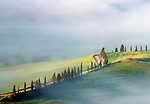 a line of cypress tress aligned along a country road atop a hill in the Orcia Valley nearby Pienza, Tuscany, Italy. Taken from the bastions of Pienza, a wonderful vantage point overlooking the rolling hills of the Valdorcia, on a very foggy morning at the end of Aprils, seconds after sunrise