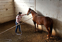 Kitty Lauman trains mustangs--as she says working with the horses, not against them.  They have a ranch in Prineville, OR.<br /> After several hours, Kitty finally gets to the point where the mustang horse trusts her to be touched.<br /> <br /> Kitty, her husband Rick and their children, Josie, 2 &frac12;,  and Tanner, 5,  ride mustangs. Kitty Lauman started her career as a horse trainer at the tender age of nine, under the guidance of her grandfather, John Sharp. <br /> <br /> She later became a top Pee Wee and High School Rodeo contestant, competing in barrel racing and cutting, among other events. Despite her mother's assertion that &quot;horse training isn't a real job,&quot; Kitty managed to make a living as a trainer after high school (and her mom now helps out with the business!) <br /> <br /> Kitty won the title of Miss Rodeo Oregon in 1994, and since then, has continued to expand her horse training knowledge and experience.  She placed second in the Extreme Mustang Makeover, a national competition in 2008.