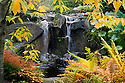 WA08868-00...WASHINGTON - Fall time at the waterfall in Shorts Ground Cover Garden area of Bellevue Botanical Garden.