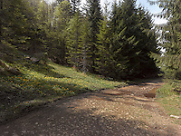 FOREST_LOCATION_90007