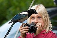 Elster, zutrauliches, an Menschen gewöhntes Tier auf dem Fotoapparat eines Kindes, Pica pica, Magpie, Pie bavarde
