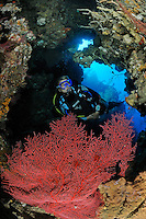 Taucherin in Grotte mit roter Faecher Gorgonie, scuba diver in cavern with red gorgonian fan, Bali, Indonesien, Indopazifik, Bali, Indonesia Asien, Indo-Pacific Ocean, Asia