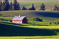 Red barn in grain field in Swan Valley Idaho
